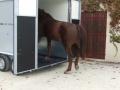 vans-fautras-oblic+2-neuf-2 chevaux